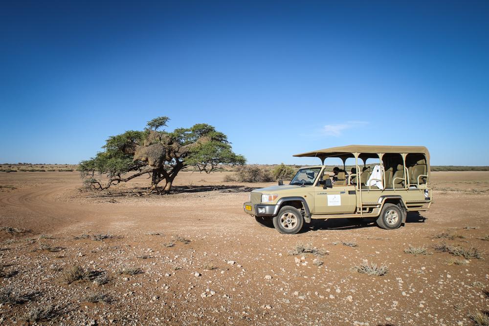 16-1-namibia-kameldornbaum-jeep