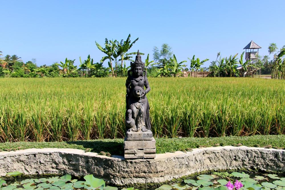 Weltreise Station: Ubud auf Bali, Indonesien