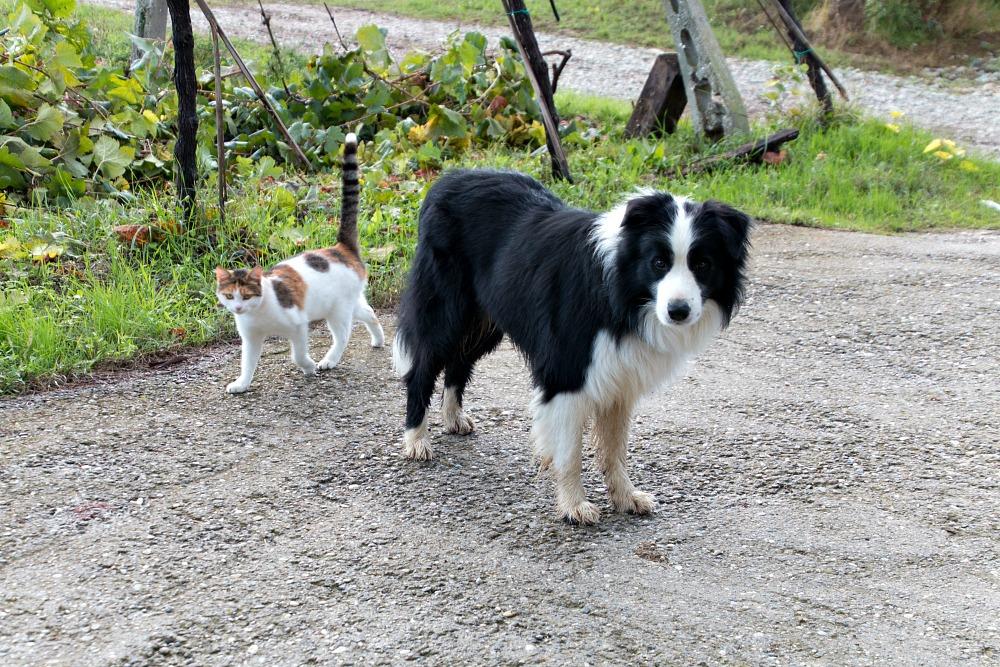 Hund und Katze in Italien
