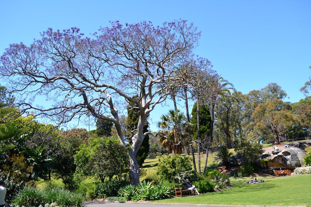 Botanischer Garten in Sydney, Australien
