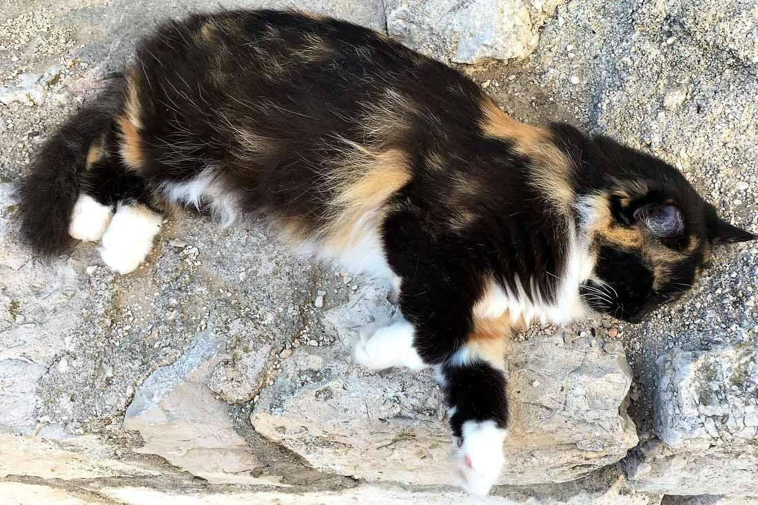 Katze in Kroatien