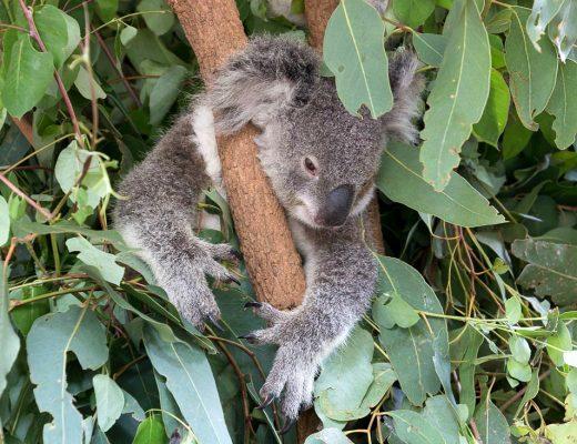 Working Holiday oder Gap Year in Australien? Meine Highlights & Erfahrungen