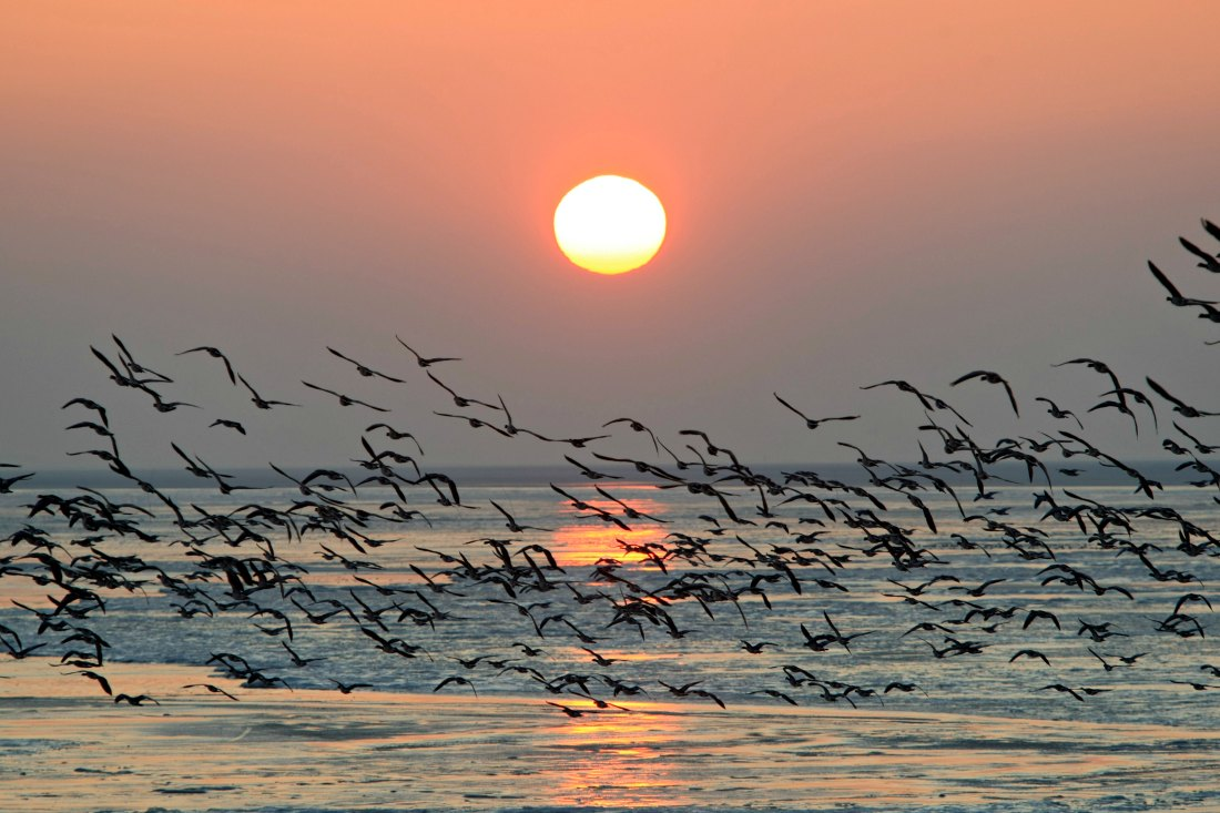 Sonnenuntergang auf holländischer Nordseeinsel