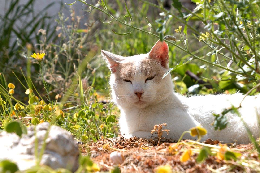 Katze in Griechenland