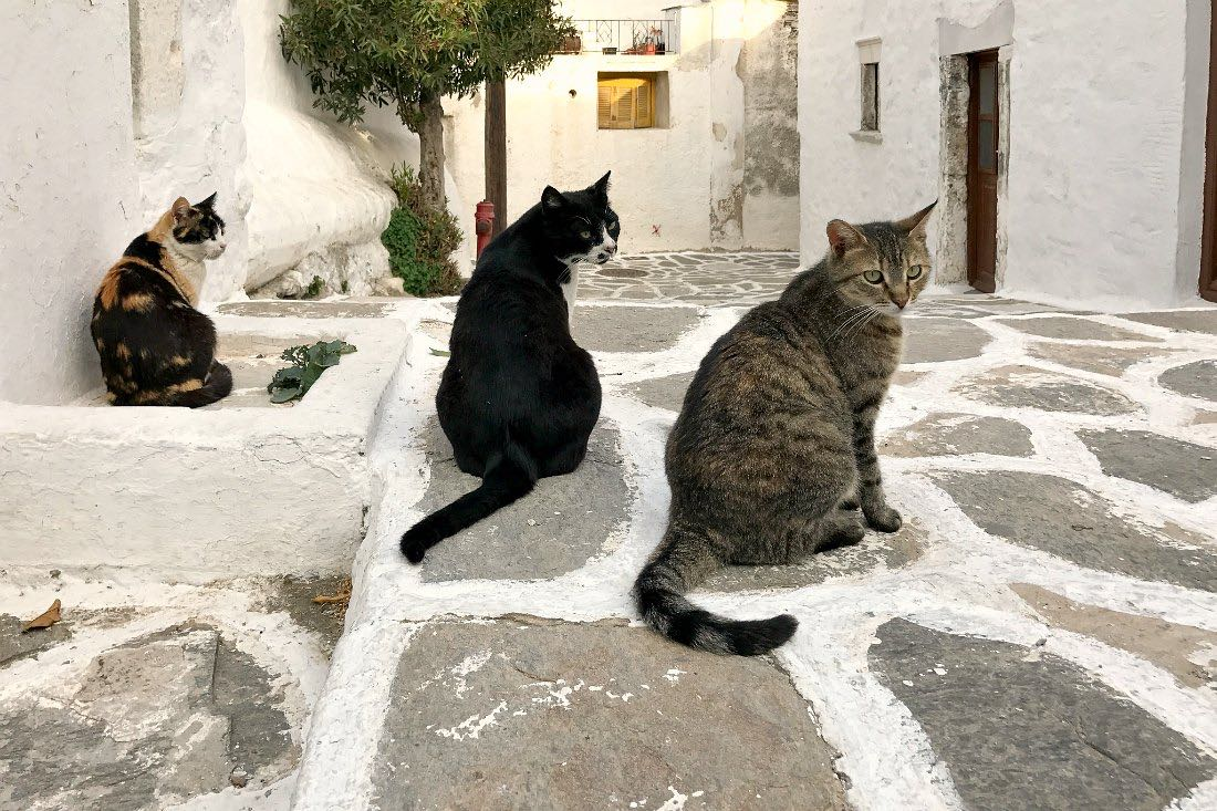 Katzen auf Paros Griechenland