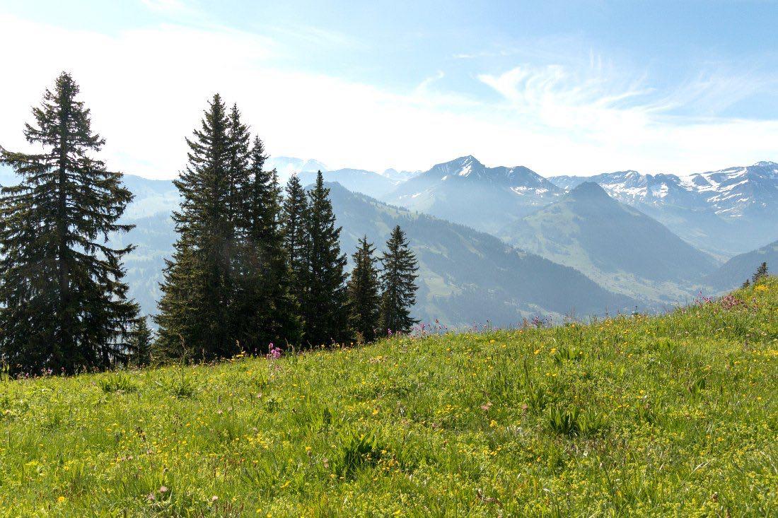 Bergblick in der Schweiz