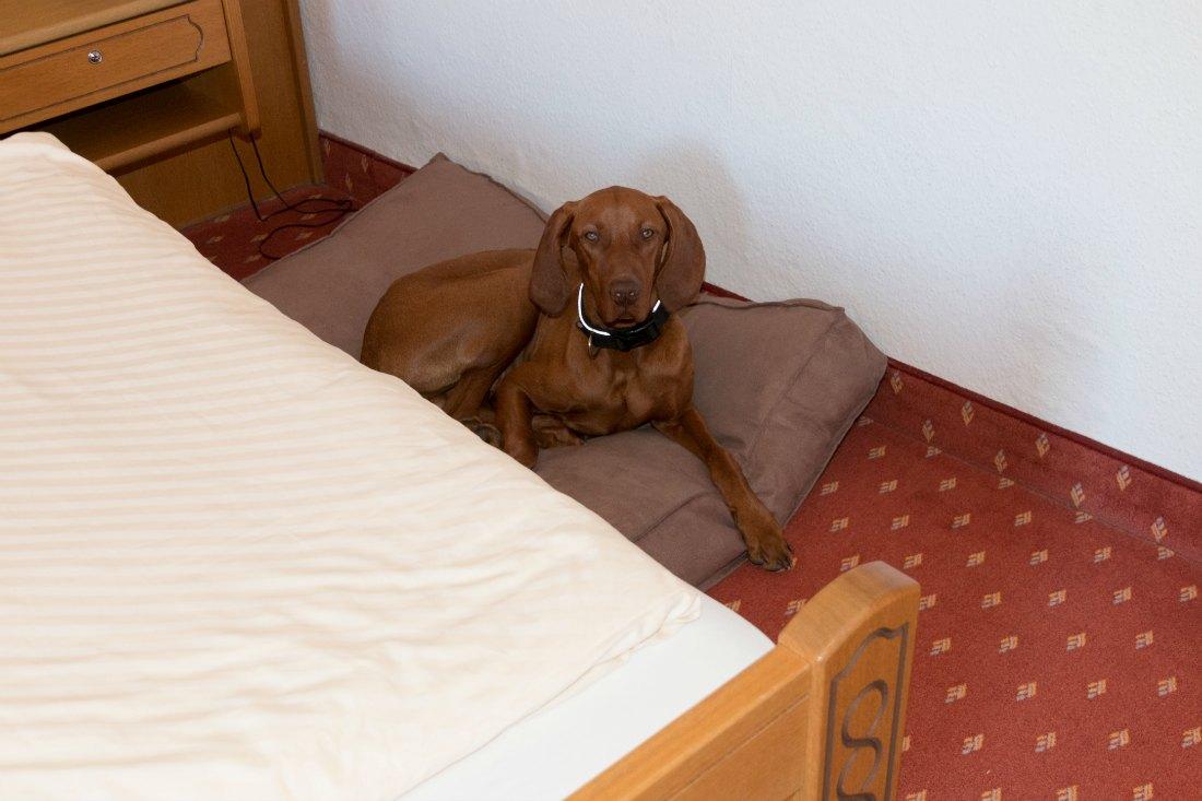 Hundefreundliches Hotel