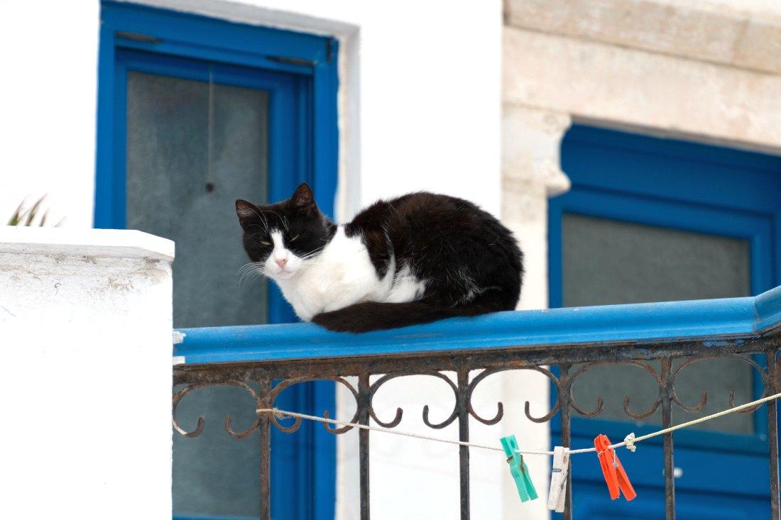 Katze auf Naxos