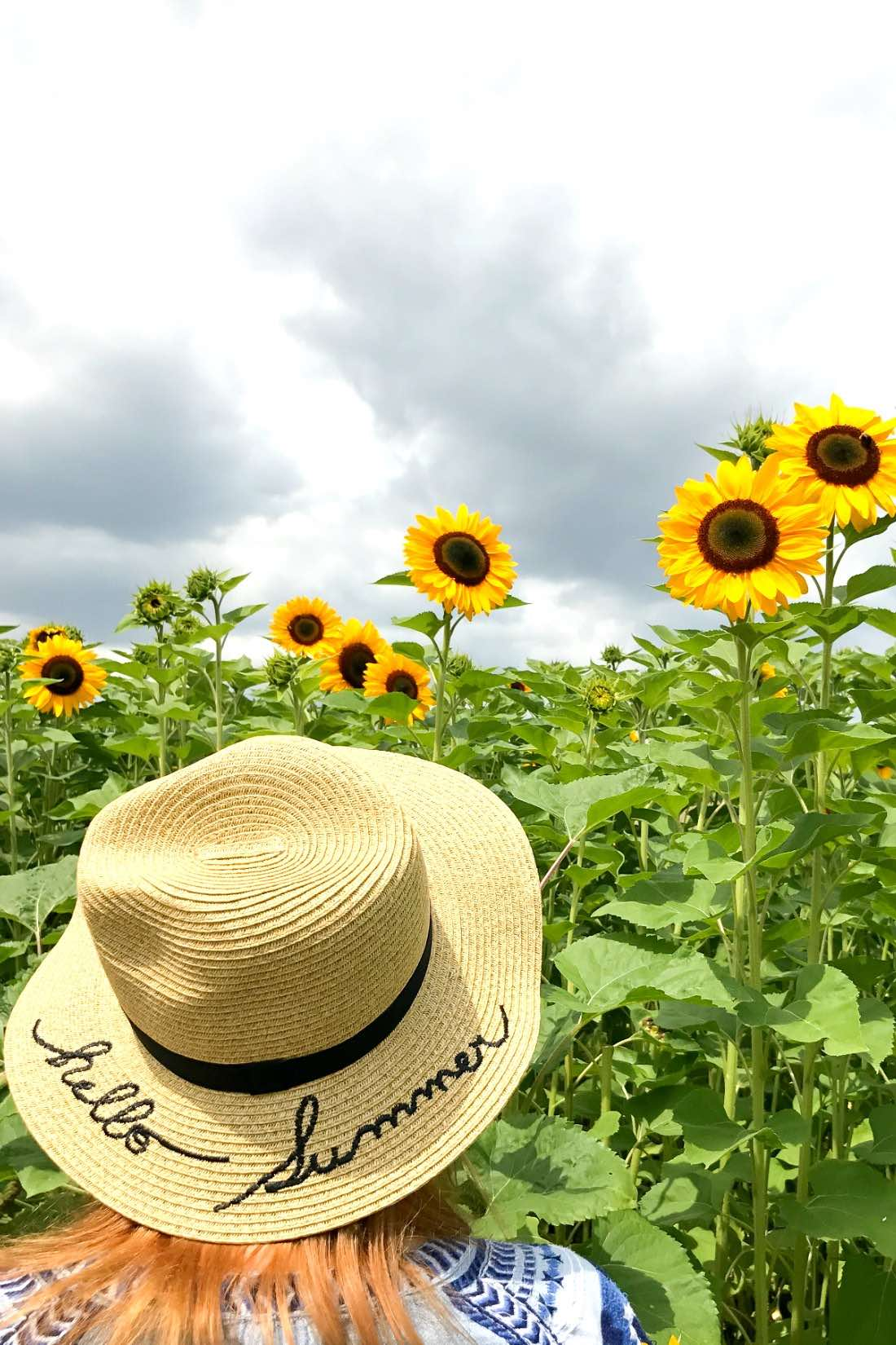 Sonnenblumenfeld in der Naheregion