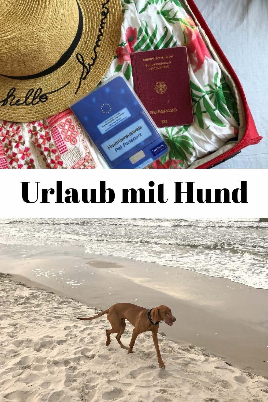 Die besten Tipps & Tricks für Urlaub mit Hund: Welches Reiseziel? Wie dorthin kommen - mit Auto oder Campervan? Packliste: Was für den Hund mitnehmen? Ferienhaus oder Hotel? Wie finden wir hundefreundliche Strände, Cafés und Restaurants? Hier kommt unser Erfahrungsbericht von unserem Urlaub mit Hund am Meer, an der Ostsee in Polen. #UrlaubmitHund #FerienmitHund #ReisenmitHund #Polen #Ostsee #Meer #Strand #Urlaub #Reise #Reisen #Reiseblog #Reiseblogger #Hundeblog #Hundeblogger