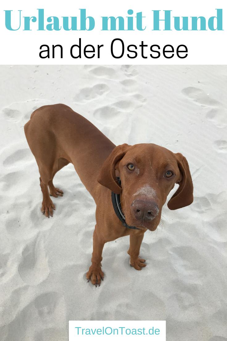 Die besten Tipps & Tricks für Urlaub mit Hund: Welches Reiseziel? Wie dorthin kommen - mit Flugzeug oder Auto? Was für den Hund mitnehmen? Ferienhaus oder Hotel? Wie finden wir hundefreundliche Strände, Cafés und Restaurants? Hier kommt unser Erfahrungsbericht von unseren ersten Ferien mit Hund am Meer, an der Ostsee in Polen. #UrlaubmitHund #FerienmitHund #Polen #Ostsee