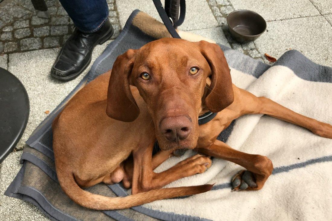 Urlaub mit Hund: Hundefreundliche Cafés und Restaurants
