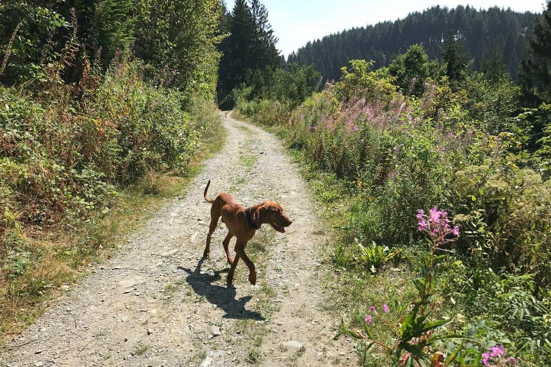 Urlaub und Ausflug mit Hund