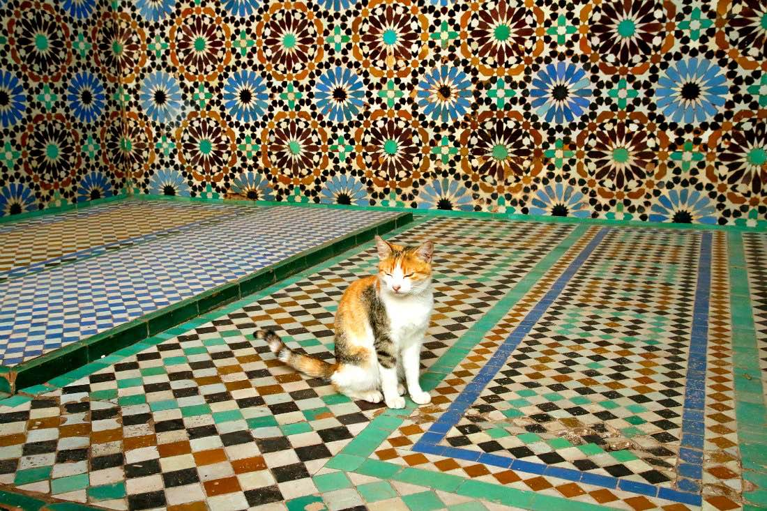 Katze in Marokko