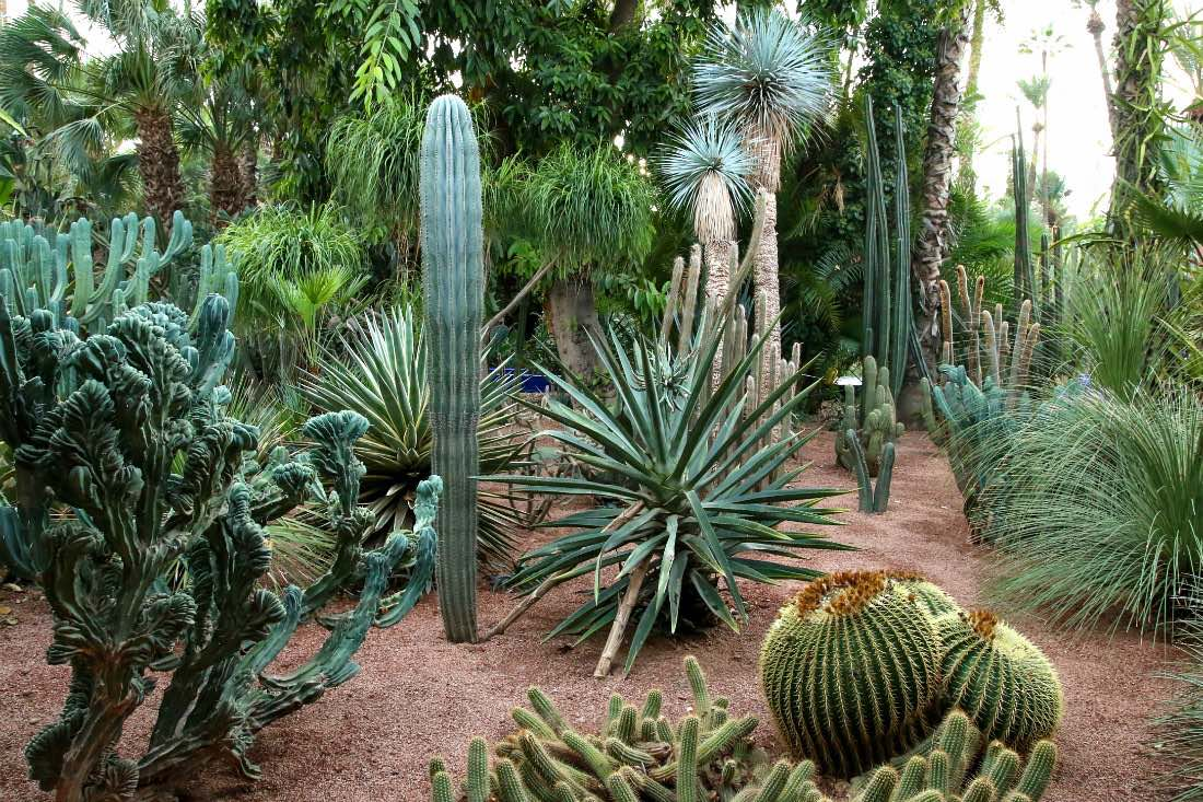 Jardin Majorelle in Marrakesch