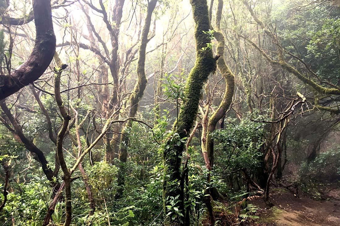 Anaga-Gebirge mit Nebelwald