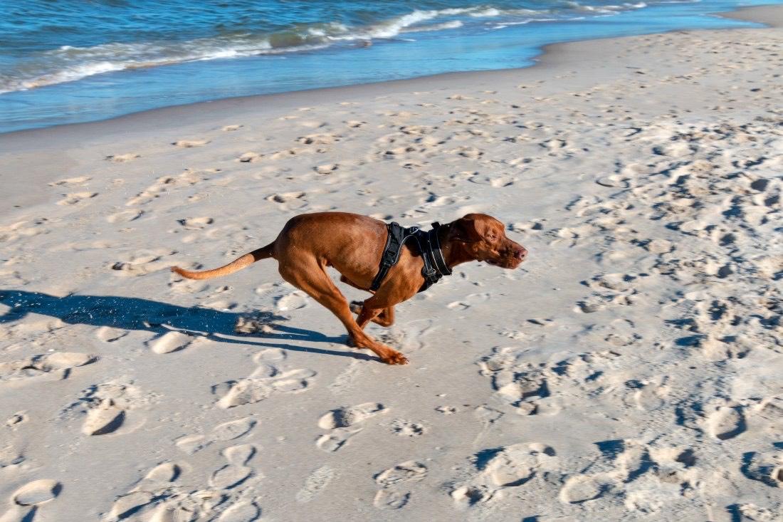 Urlaub mit Hund Ostsee