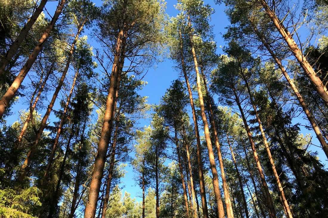 Wald in Kolberg
