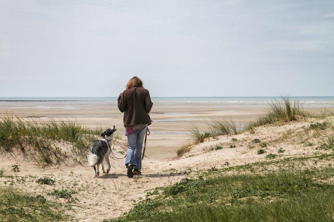 Hundeurlaub in der Normandie Frankreich