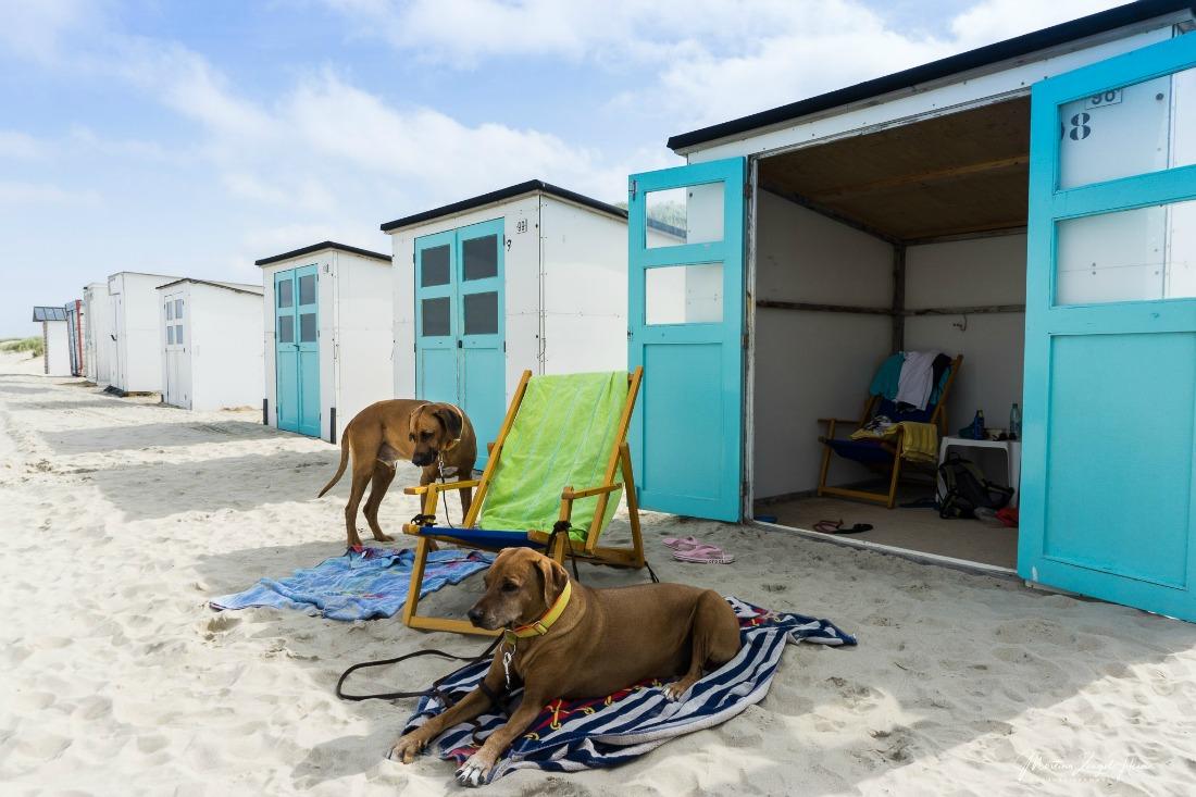 Hundeurlaub auf Texel in Holland