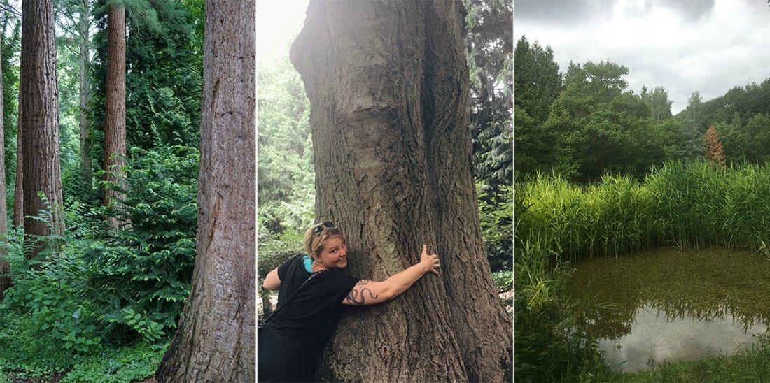 Ausflugsziele am Niederrhein Mammutbäume