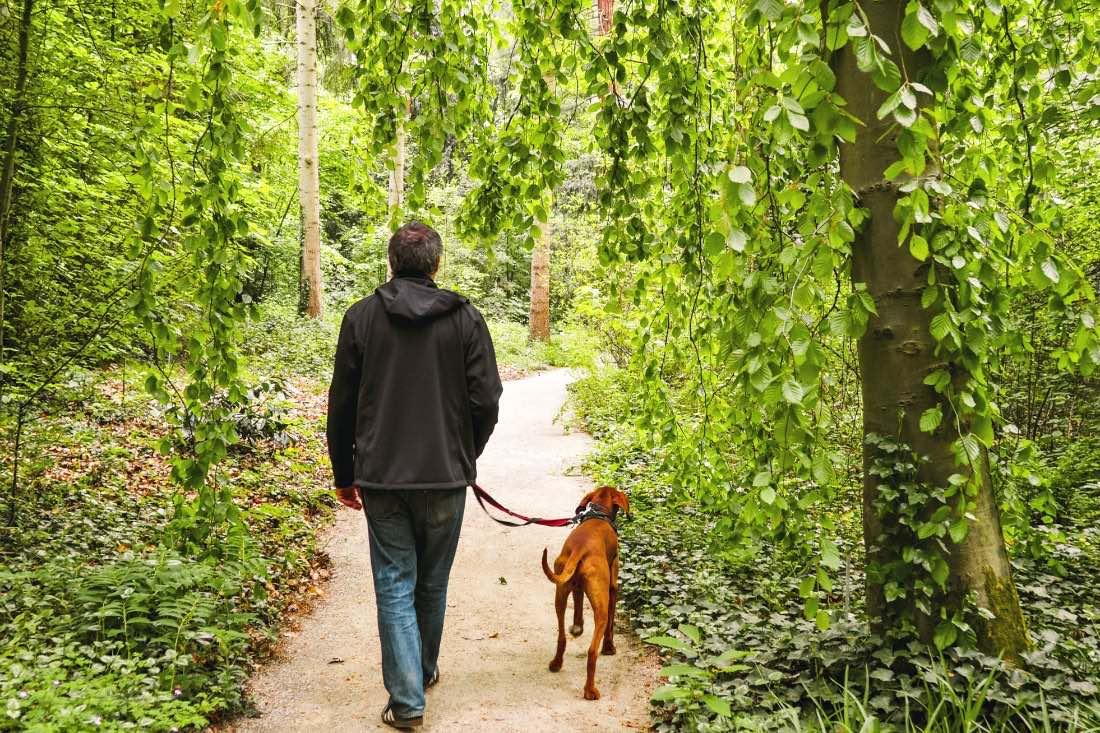 Ausflug mit Hund in die Natur