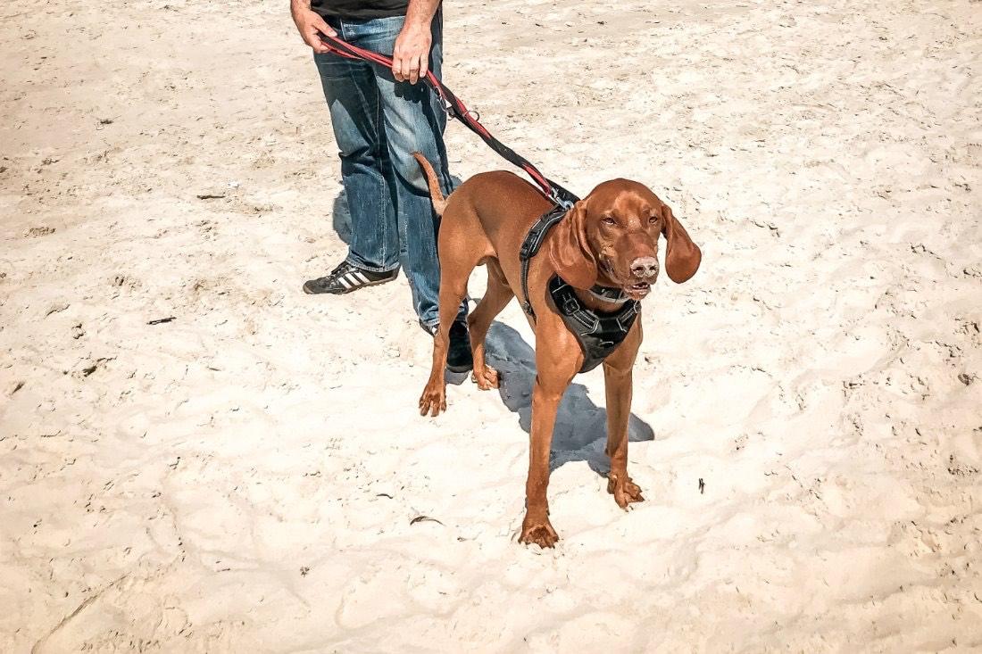 Ostsee Urlaub mit Hund Kolberg Polen Erfahrungen