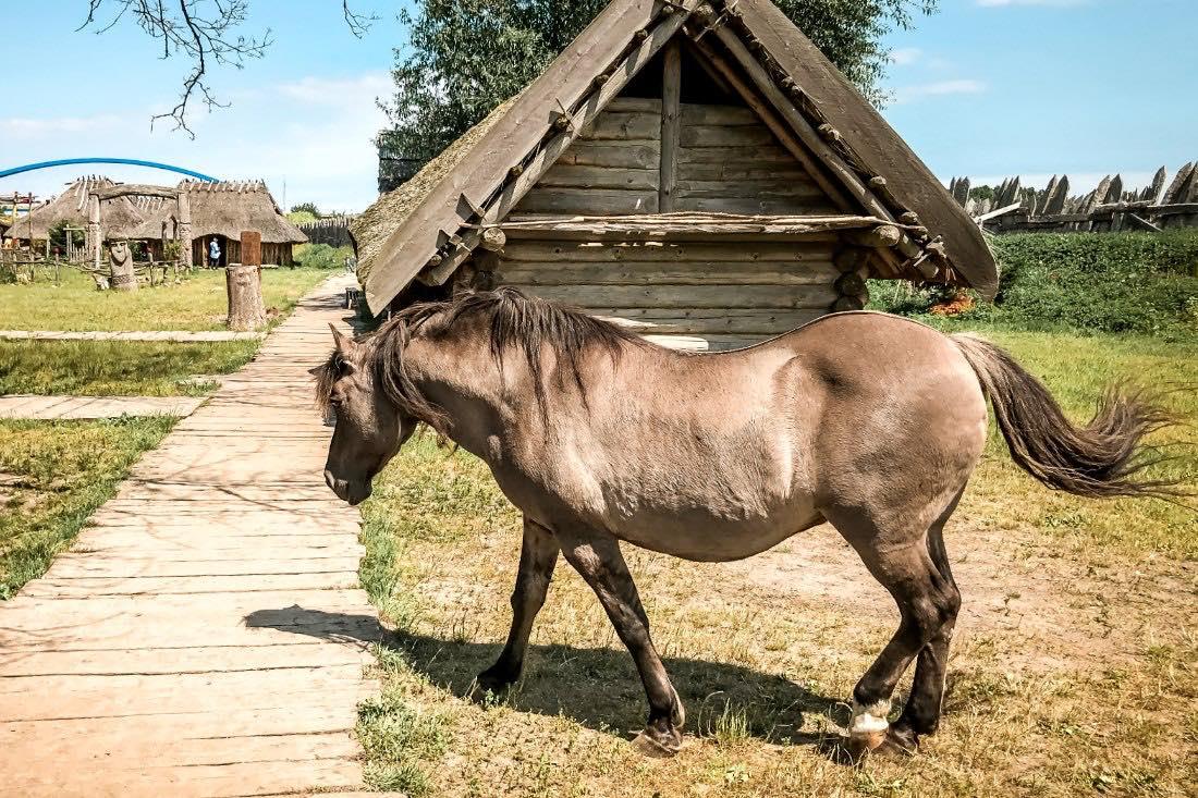Wikingerpark Wollin Polen Pferd