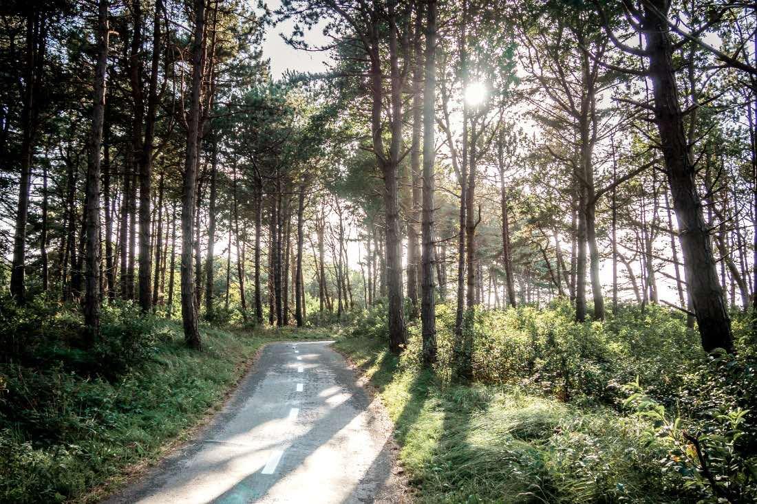 Wald auf Terschelling