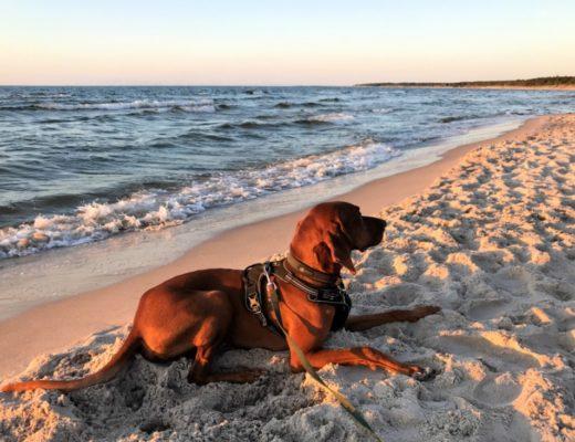 Urlaub mit Hund Geheimtipp polnische Ostsee