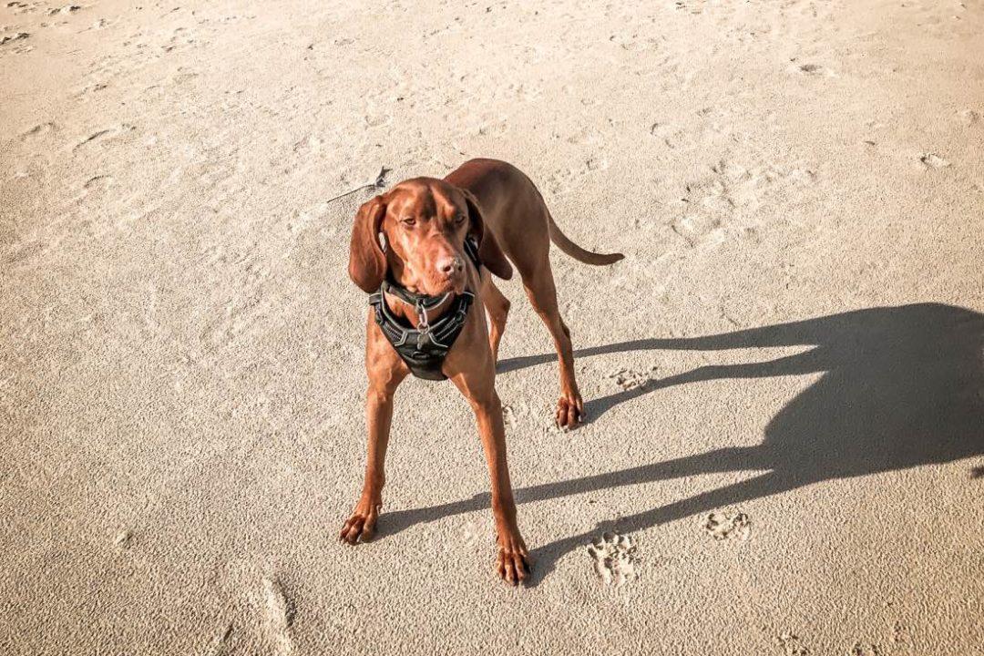 Urlaub mit Hund Geheimtipps Hundeurlaub
