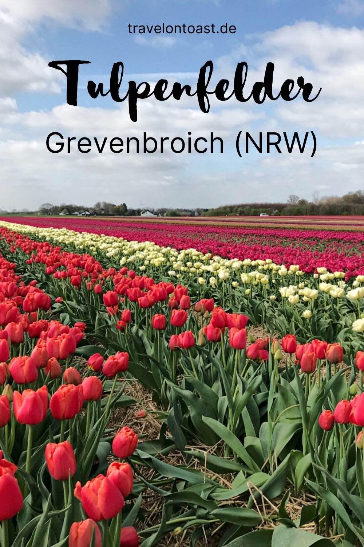 Was ihr sicher aus Holland kennt, könnt ihr auch in Deutschland erleben. Genauer gesagt in NRW. Die Tulpenfelder in Grevenbroich sind tollfür einen Ausflug im Frühling!