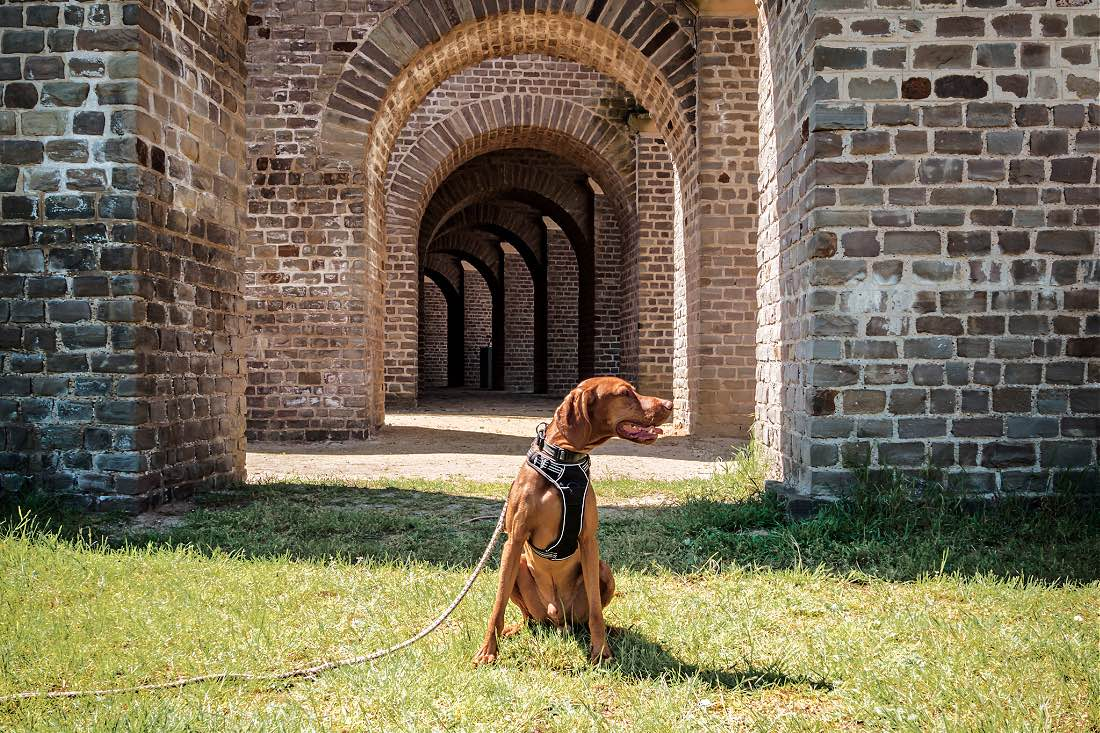 APX Hunde erlaubt