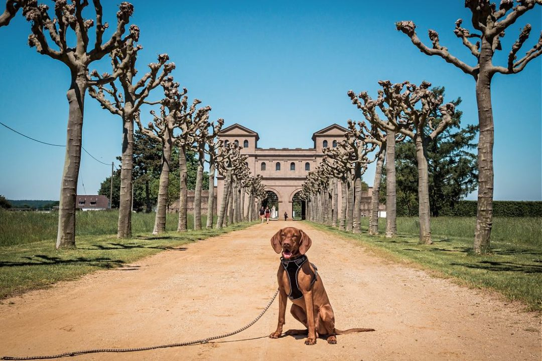Archäologischer Park Xanten mit Hund