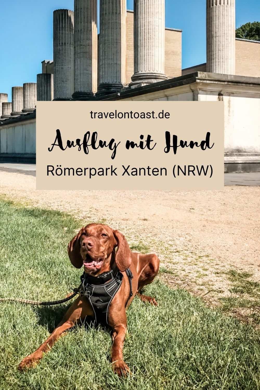 Römische Häuser, Tempel und ein Amphitheater sahen wir am Niederrhein. Ende Mai 2021 machten wir einen Ausflug mit Magyar Vizsla Buddy - einem ungarischen Jagdhund - zum Archäologischen Park Xanten (APX). Das ist ein Museum mit originalgetreuen Nachbauten. Im Reiseblog findest du meine Tipps für den Römerpark Xanten, Deutschlands größtes archäologisches Freilichtmuseum. Mit Sehenswürdigkeiten und Highlights wie Hafentempel, Nordtor und Stadtmauer.