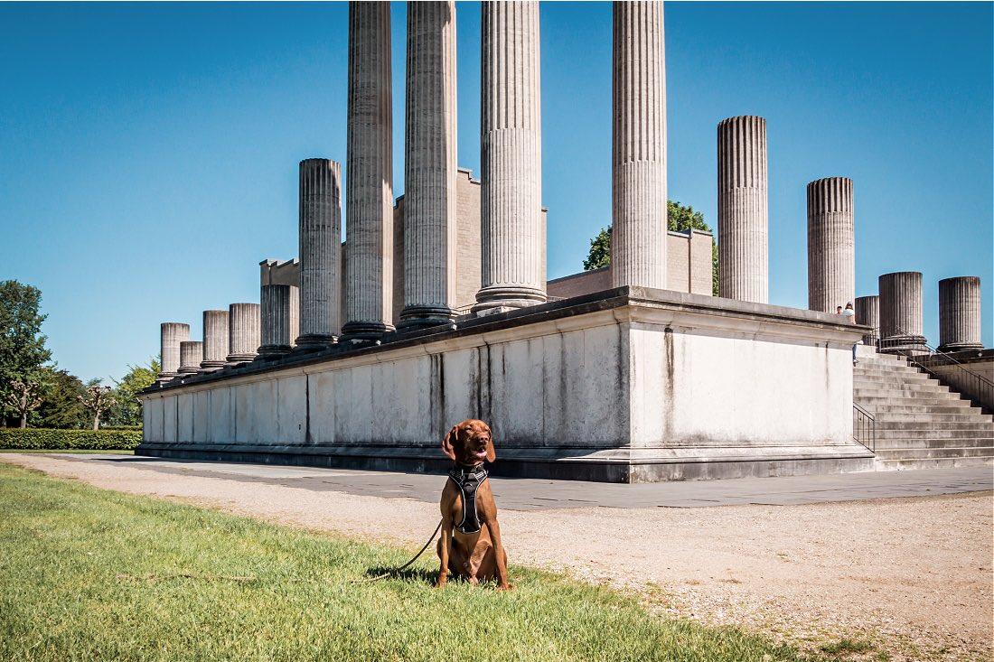 Ausflug mit Hund in den Römerpark Xanten
