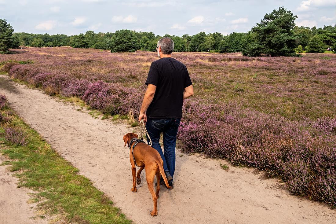 Ausflug mit Hund NRW Heideblüte