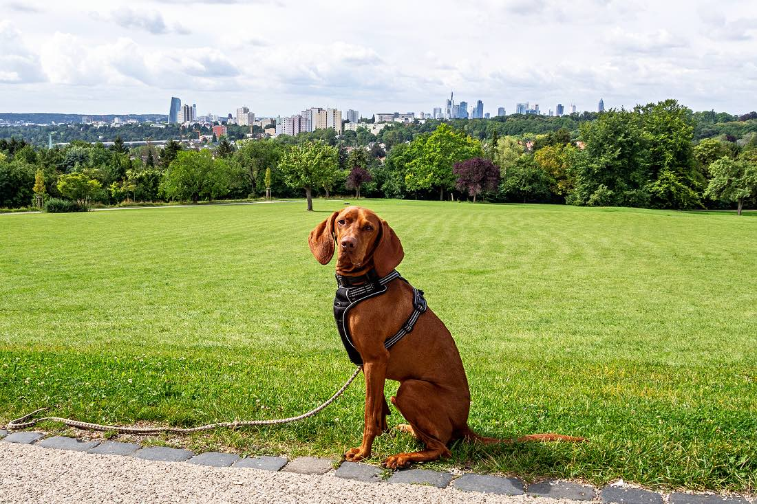 Frankfurt mit Hund Ausflugsziele Hotel Restaurants