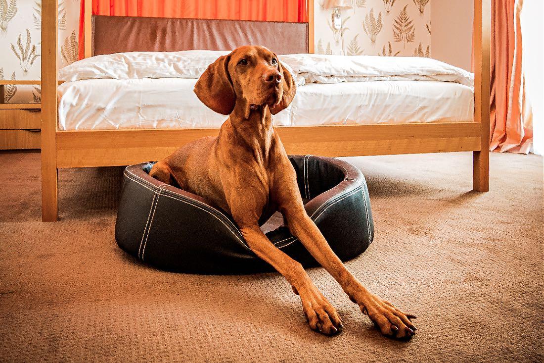 Hotel Frankfurt Hunde erlaubt