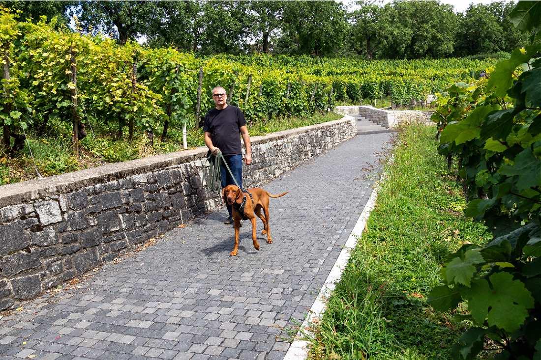 Ausflugsziel Lohrberg Frankfurt mit Hund