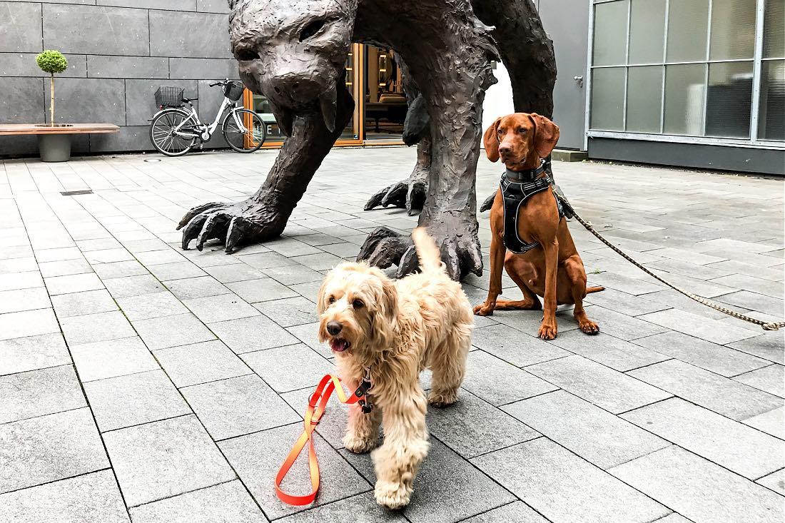 Stadtführung Frankfurt mit Hunden