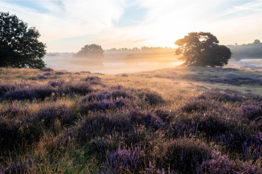Westruper Heide bei Sonnenaufgang