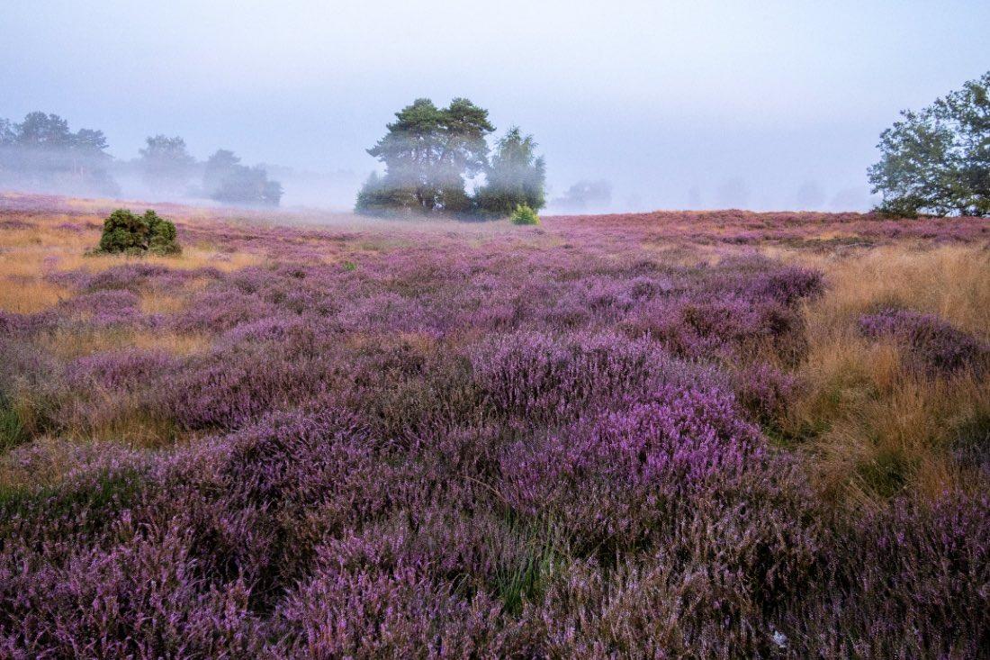 Westruper Heide bei Nebel Shooting