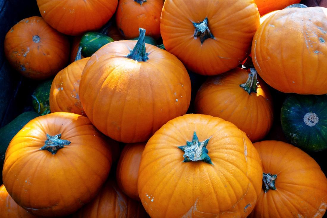 Buying pumpkins in the Eifel